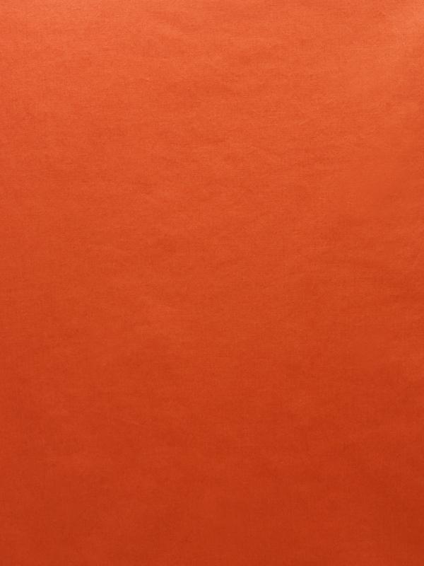 CAMICERIA COTONE - P56 000 CS